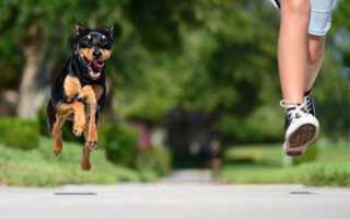 Сонник: Собака убежала