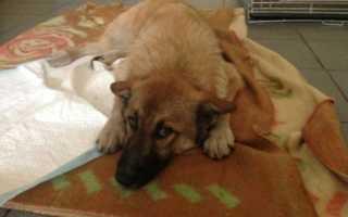 К чему снится раненая собака
