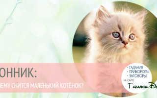 К чему снятся щенки и котята