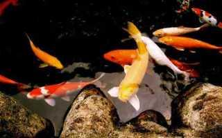 Сонник: Держать рыбу в руках