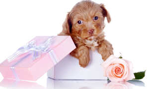 Сонник: Подарили собаку